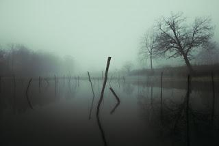 Un arbre se reflète dans l'eau du lac brumeux