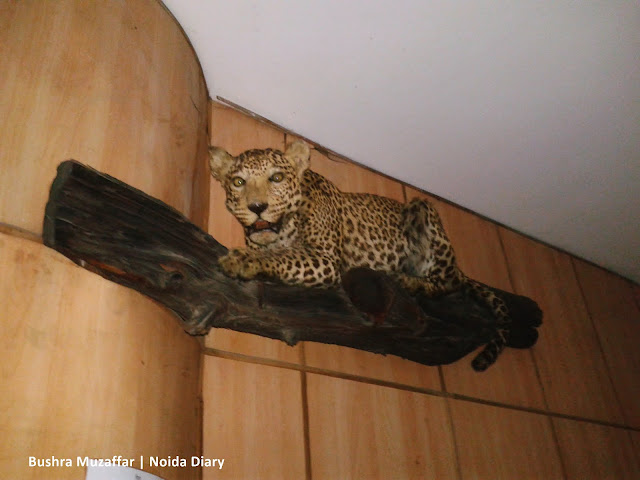 Noida Diary: Taxidermic Leopard at The National Museum of Natural History