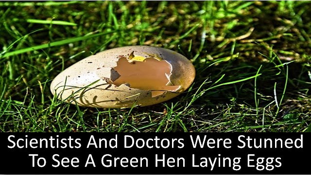 Scientists And Doctors Were Stunned To See A Green Hen Laying Eggs