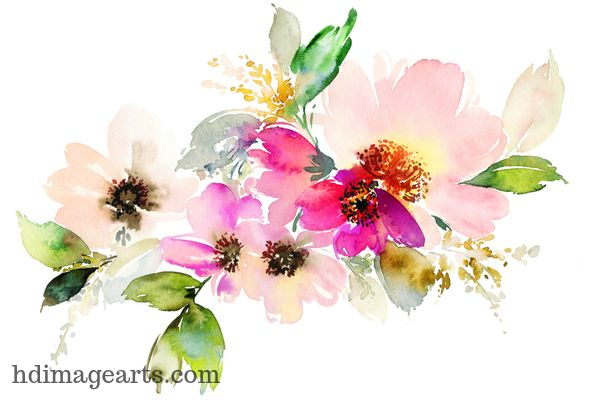 Flower Images For Whatsapp Profile