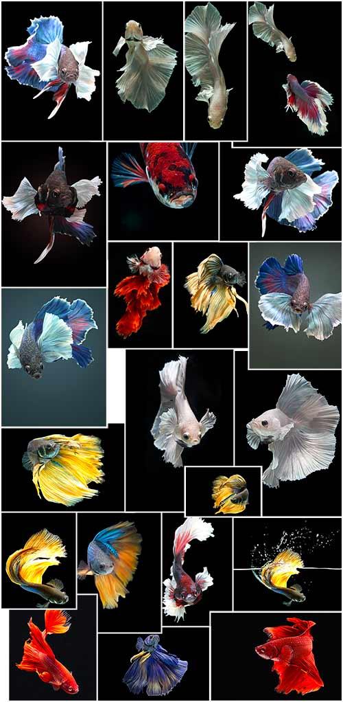 مجموعة صور للأسماك بجودة عالية