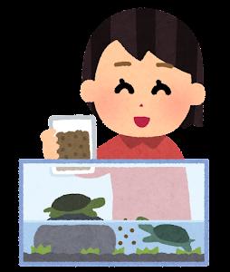ペットの亀に餌を上げる人のイラスト(女性)