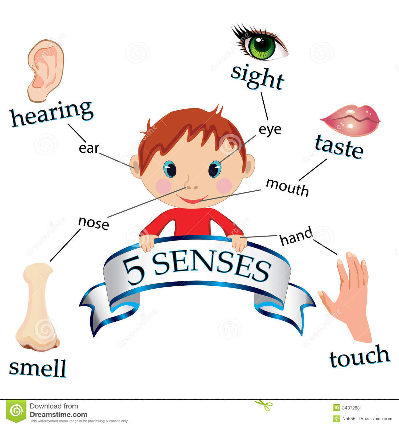 La Educacion Fisica Segun Tristan Unit 2 Natural Science Five Senses And Bones