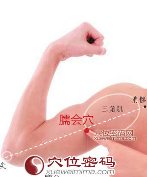 臑會穴位 | 臑會穴痛位置 - 穴道按摩經絡圖解 | Source:xueweitu.iiyun.com
