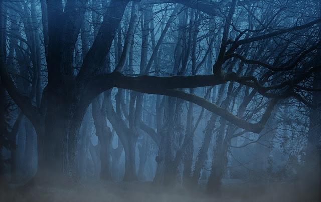 crépuscule photo mystère forêt