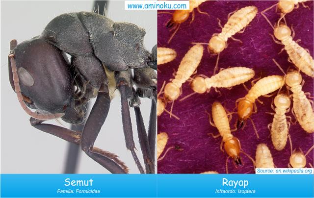 Perbedaan semut dan rayap