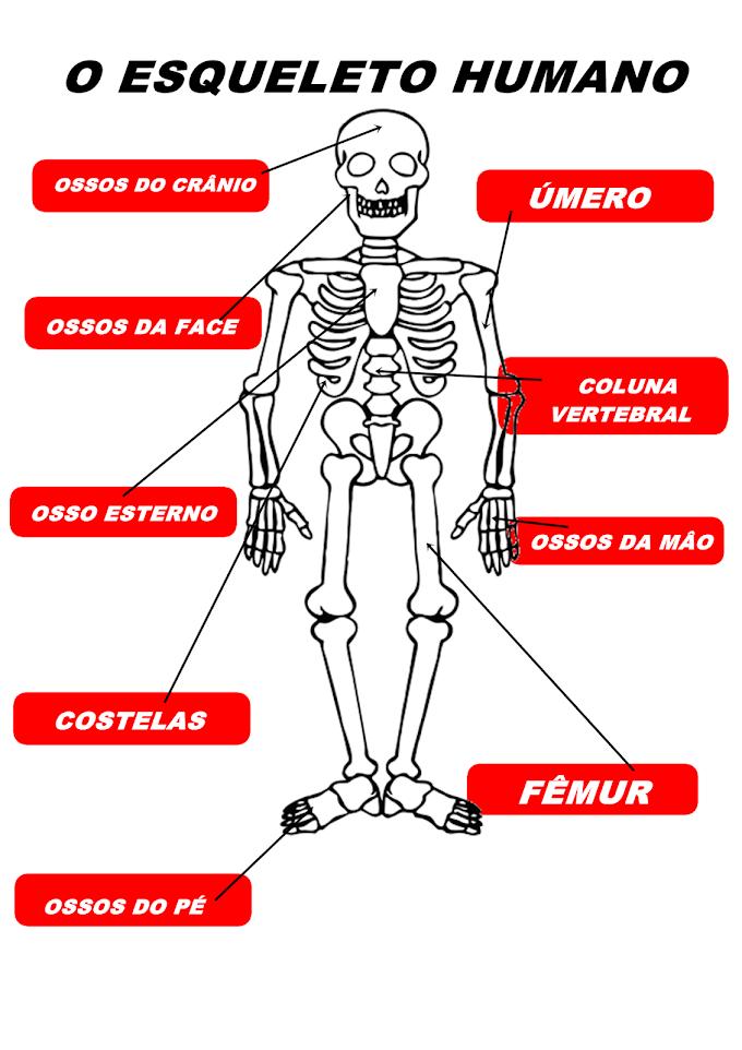 TRABALHO DE ESCOLA DO VICTOR
