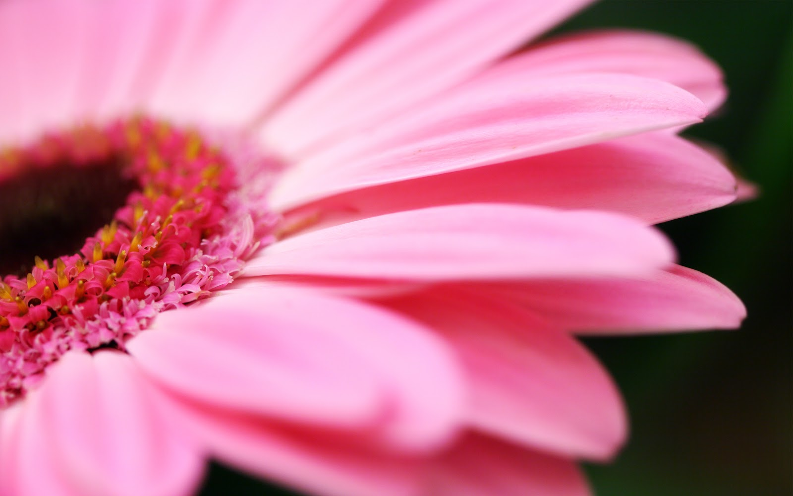 Pink flower wallpaper | Amazing Wallpapers