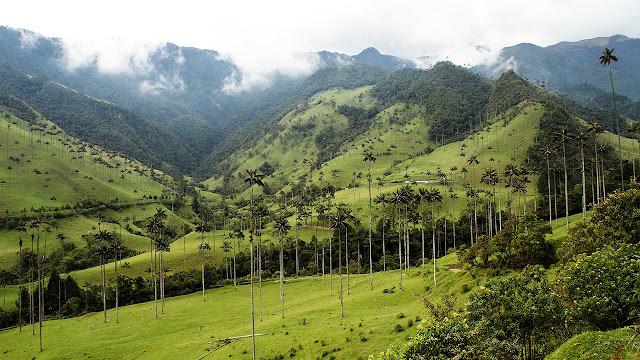 Cocora valley - Colômbia