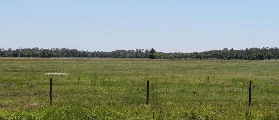 Praderas y bosques en Lake County