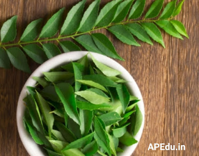 Health tips: Amazing benefits of eating curry leaves on a regular basis .. !!