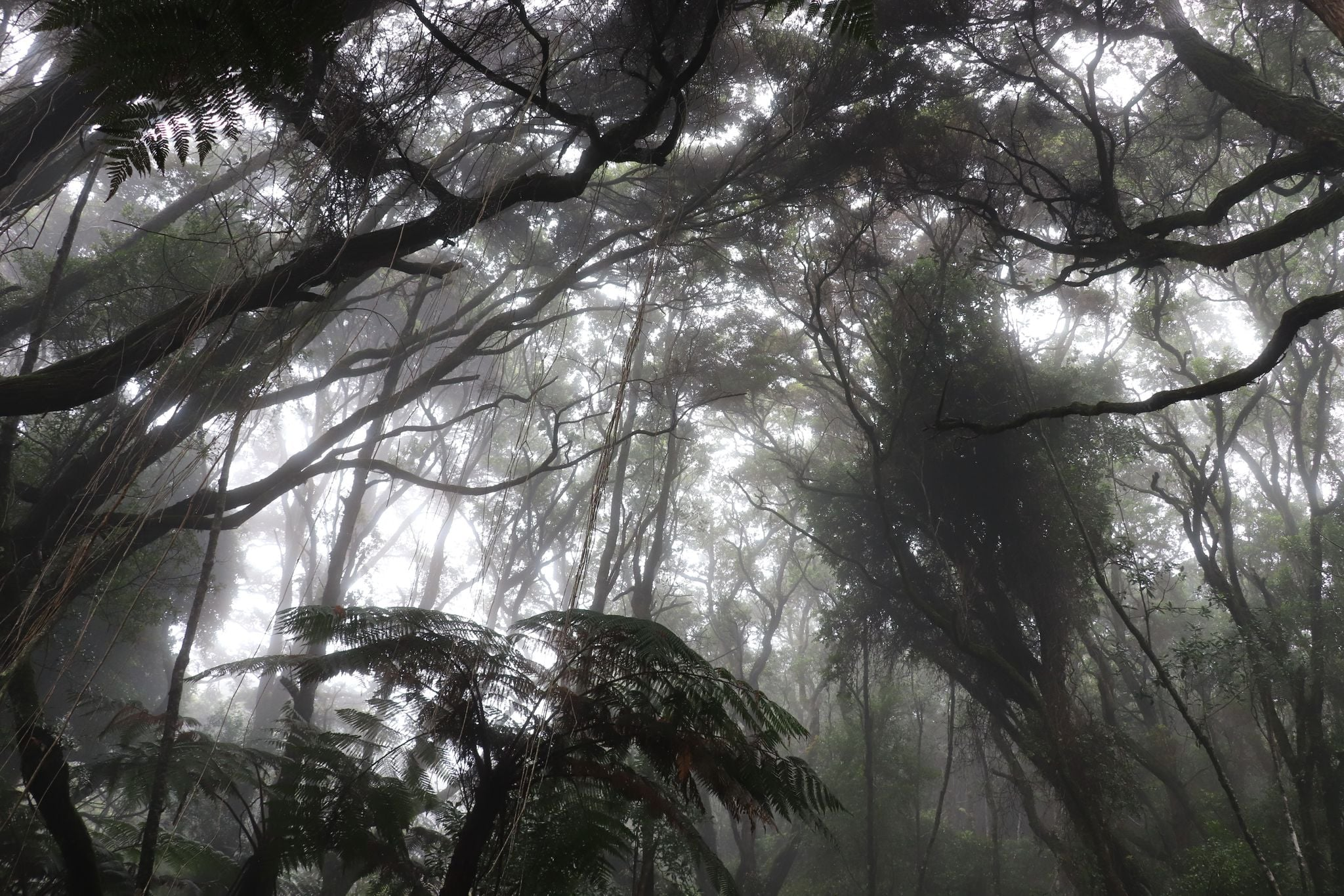 Hiking Mt. Apo - lush vegetation along Mount Apo trails