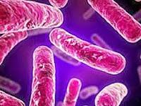 Obat TBC untuk Anak
