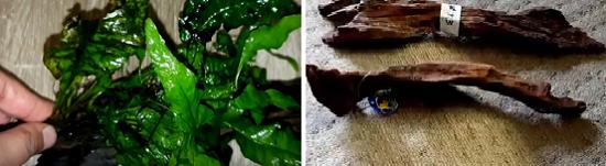 Java fern & driftwood