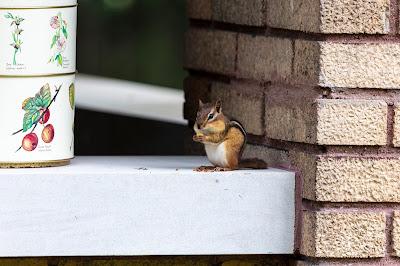 Front Porch Safari