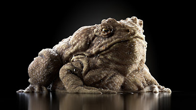 Toad Texturing by Piotr Wilk