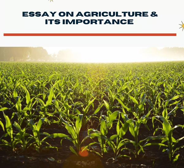Agriculture Importance and Its Engagement in Everyday Life