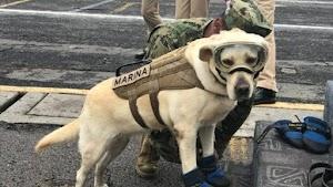 La perrita Frida, se retira y le hacen un gran homenaje
