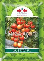 Benih tomat, Tanaman tomat Gustavi, Gustavi F1, East West, Panah Merah, LMGA AGRO, Harga murah