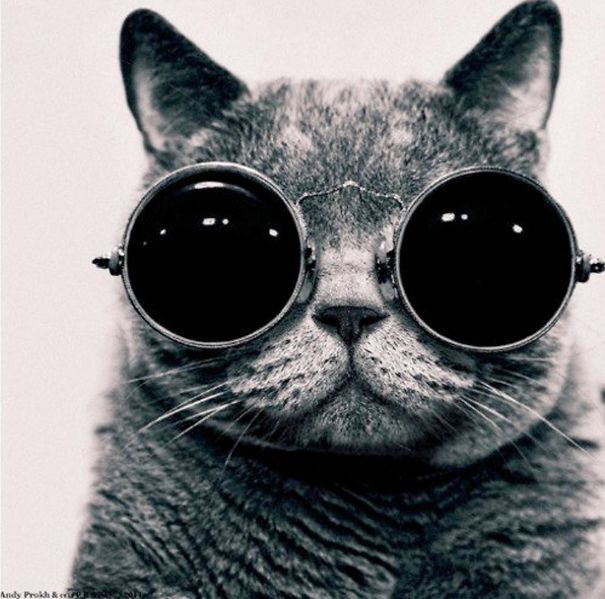 Lilu, The Cat With Glasses-2