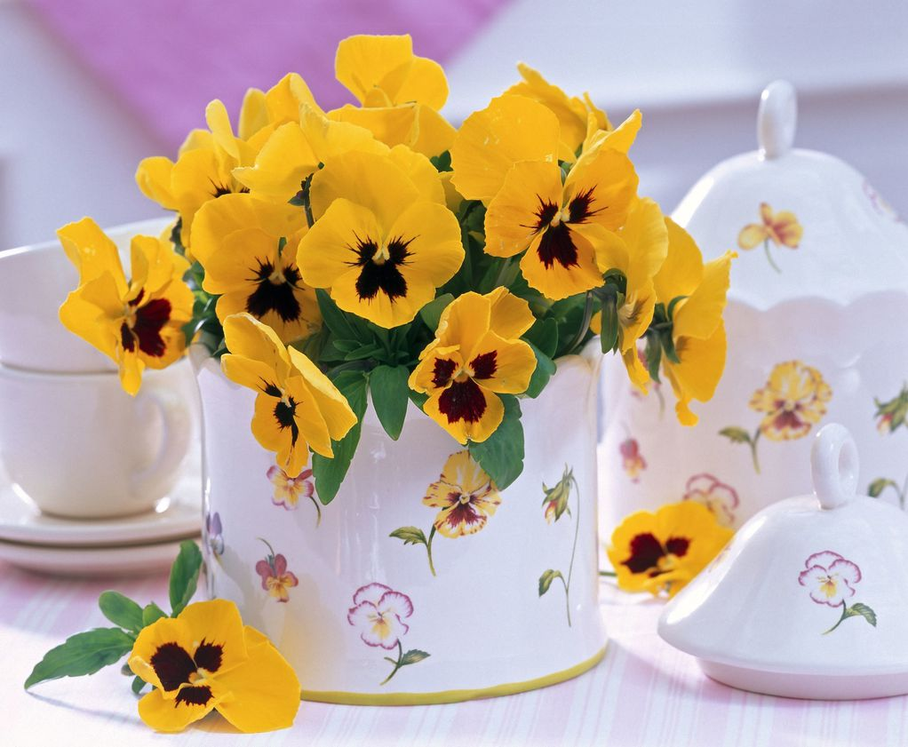 cvijeće-flowers-spring-proljeće-maćuhice-dan_i_noć
