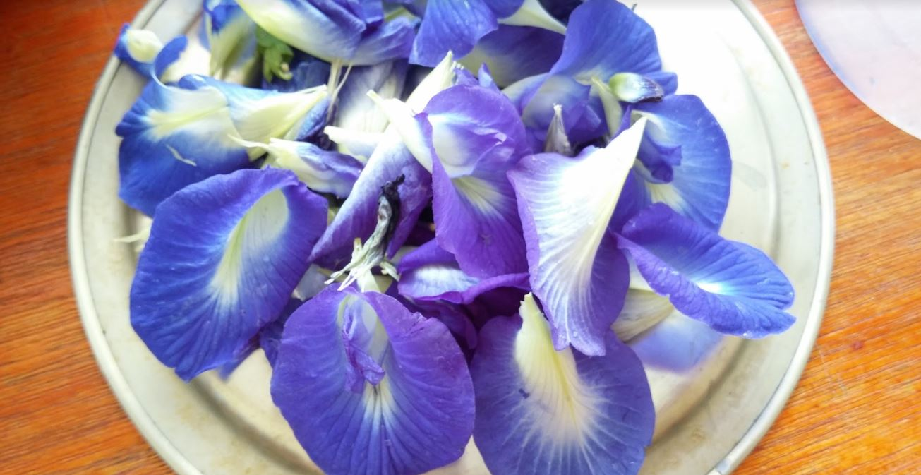 Natural Dyeing with Blue Pea Flowers