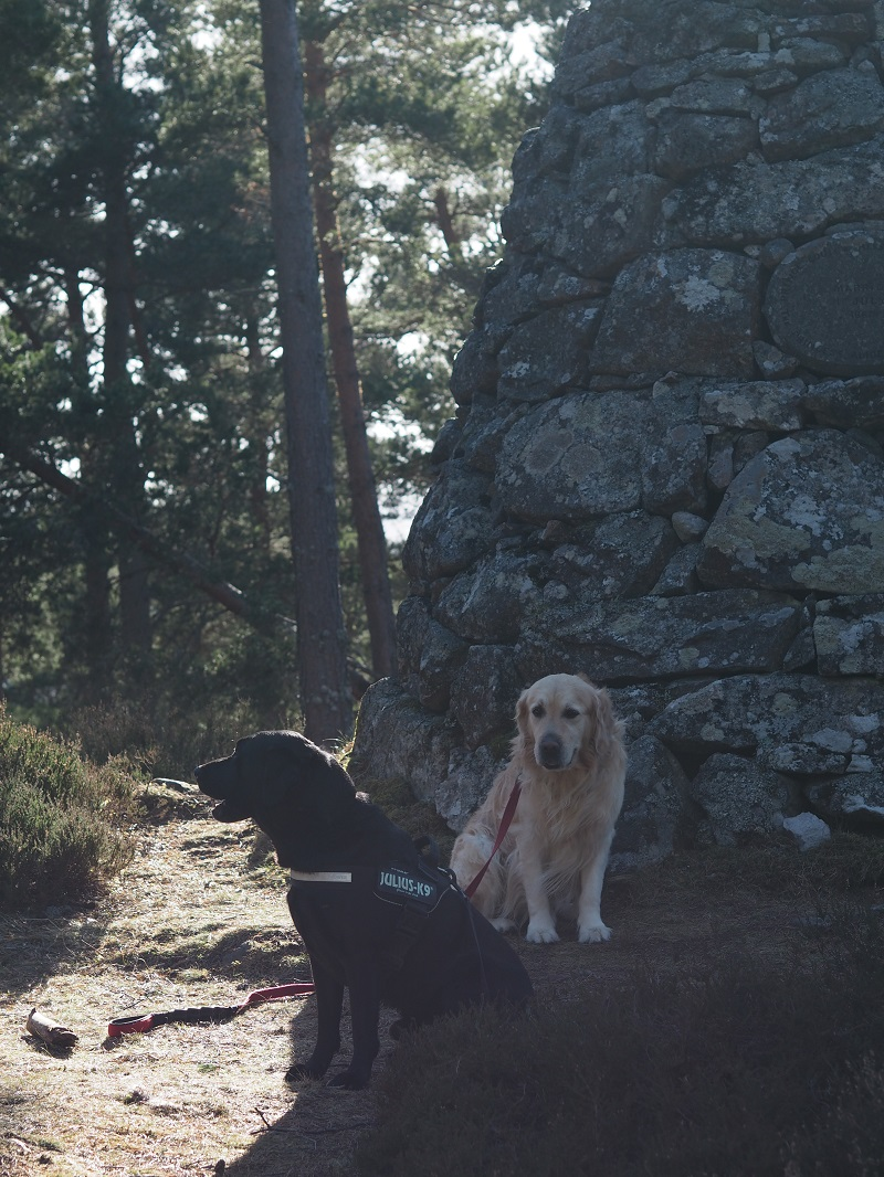 Two dogs on the Balmoral Cairns walk
