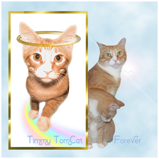 Timmy Tomcat