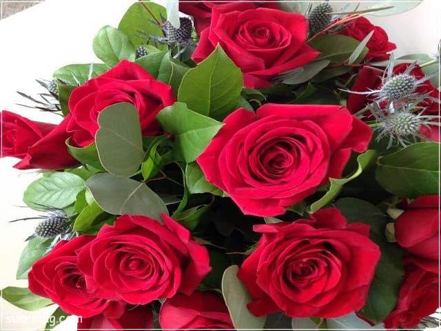صور ورد - ورد احمر 15 | Flowers Photos - Red Roses 15