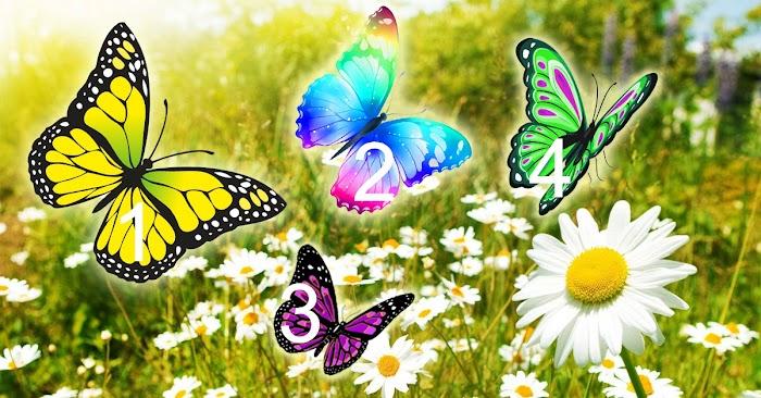 Прекрасные бабочки принесли необыкновенное послание. Какая села вам на ладонь?