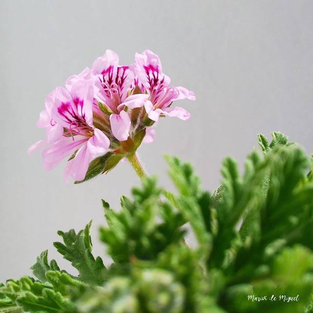 A abril con sus chaparrones, sigue mayo con sus flores.