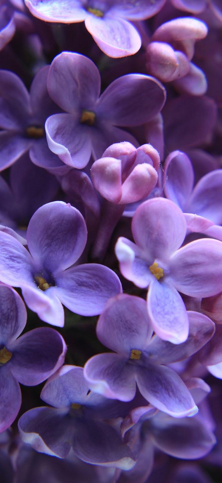 Beautiful tiny purple roses wallpaper