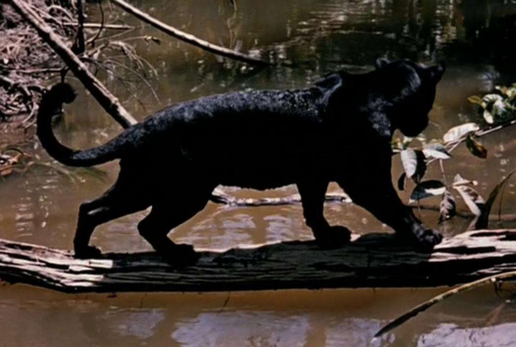 panther in das dschungelbuch
