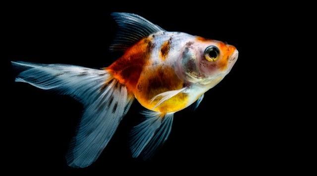 Fish Tank Heater Guide
