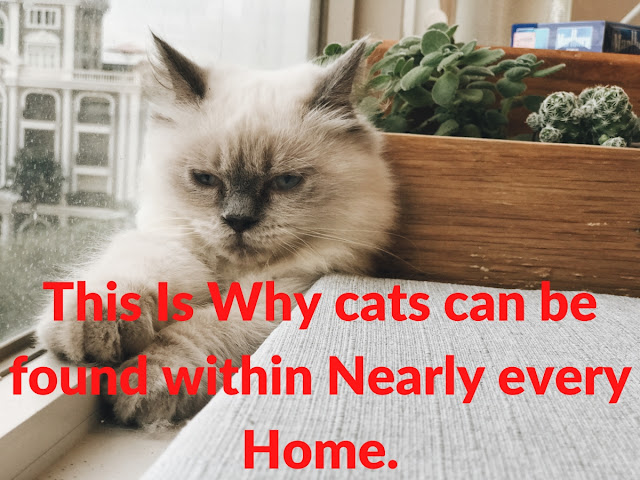 This Is Why cats can be found within Nearly every Home.