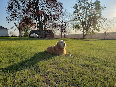 Farm Dog Tribute