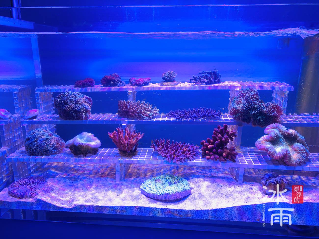 Xpark水族館|珊瑚