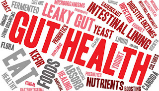Terms related to gut health and how to combat it.