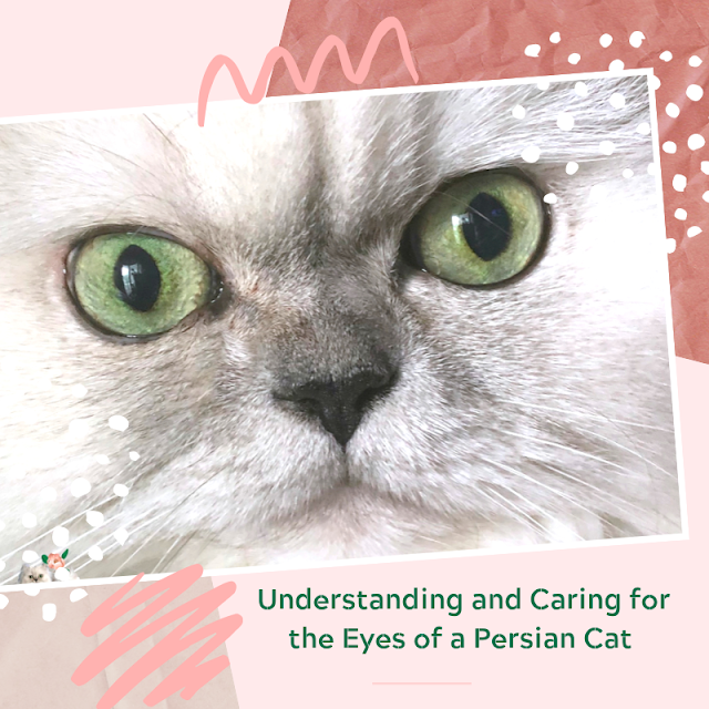 graphic of a silver Persian cat's face looking forward