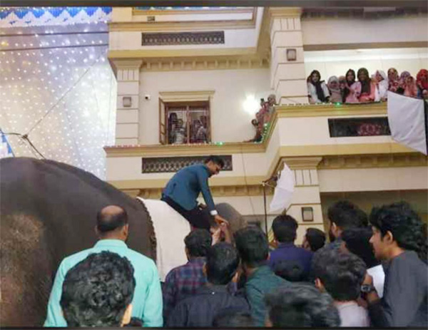 Case against groom who used elephant in marriage function, News, Local-News, Humor, Case, Marriage, Video, Lifestyle & Fashion, Kerala