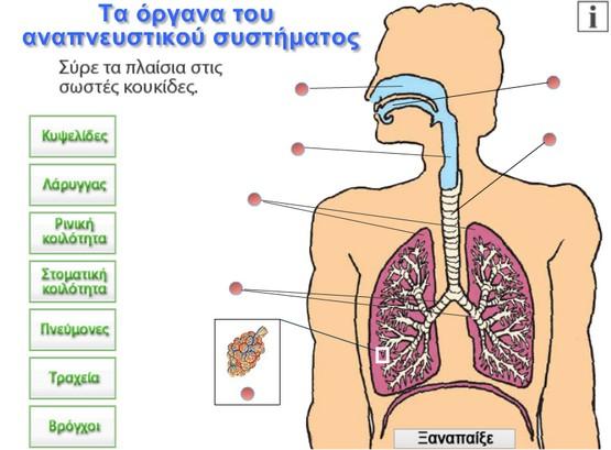http://photodentro.edu.gr/photodentro/organs_pidx0016529/kef7_organs.swf