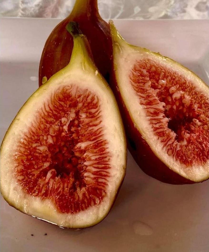 Bibit buah tin merah jumbo jenis Moyuna cangkok cepat berbuah Cimahi