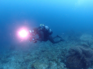2021年6月14日の柏島ダイビング