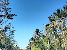 Temukan Sensasi! Menyusuri Belantara Amazon di Pacitan