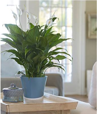 Having Sleep Problems Keep These Plants In Your Bedroom