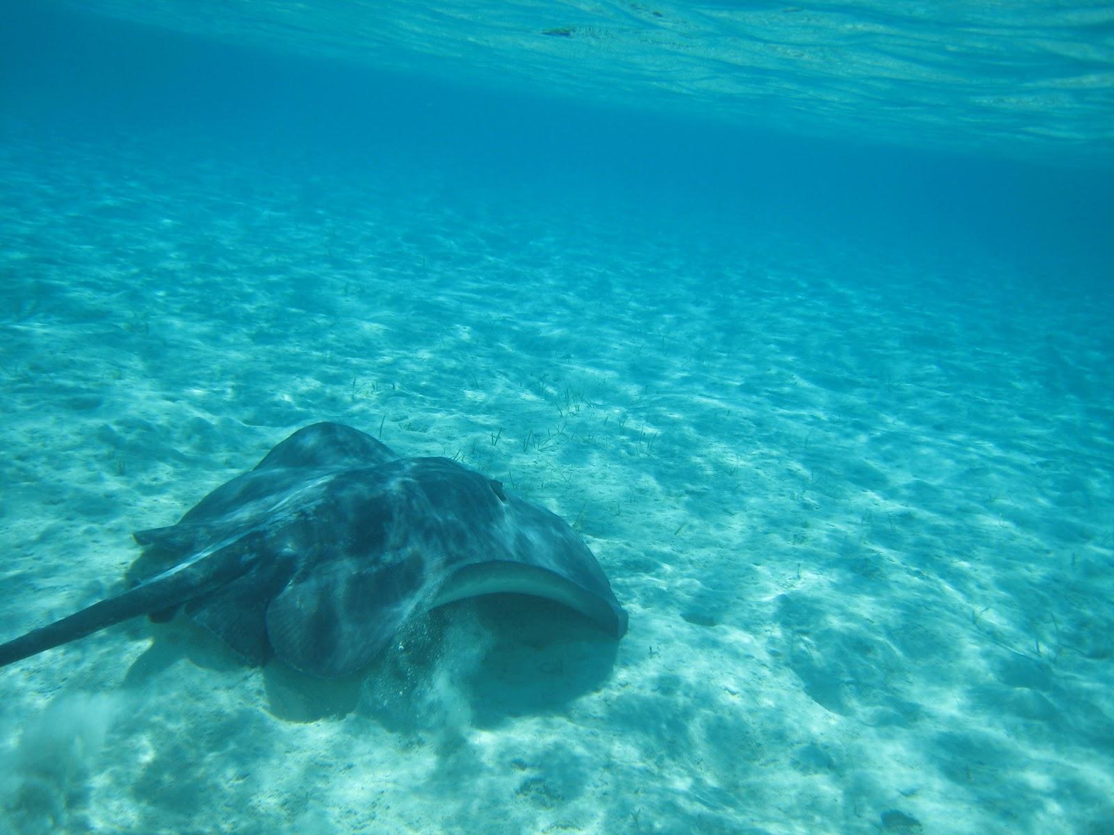 Skelton Crew: Staniel Cay Bahamas