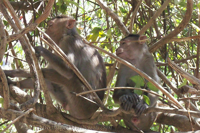 Eco tourism in India - Elephanta Caves - monkeys