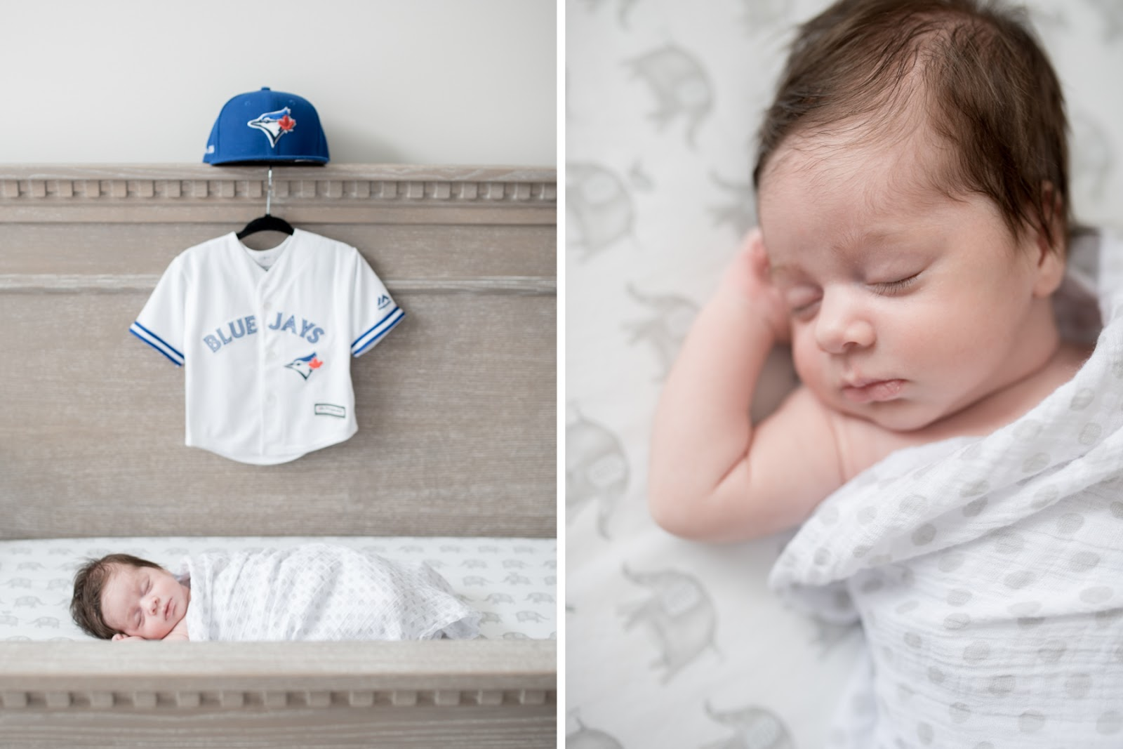 blue jays newborn photography
