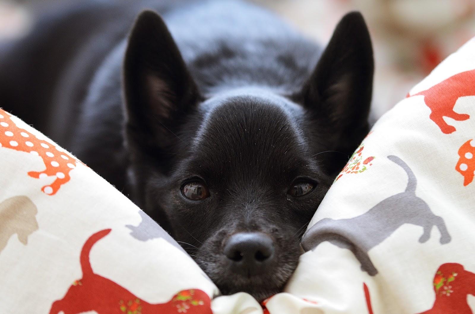 PSIA MATKA - niezbędnik psiej matki