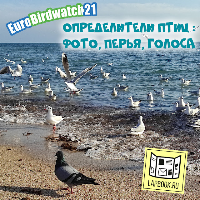 определители птиц